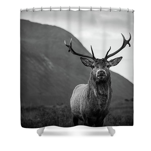 The Stag.  Shower Curtain