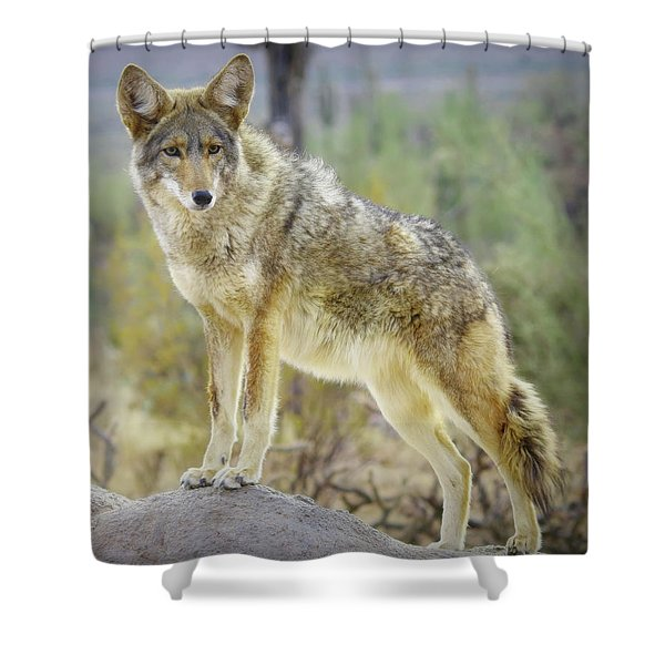 The Stance Shower Curtain