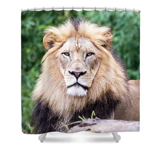 The Stare Down Shower Curtain