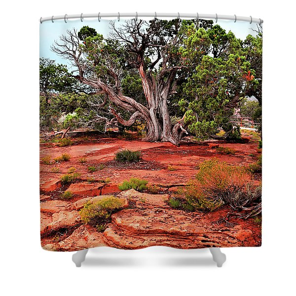 The Tree That Knows All Shower Curtain