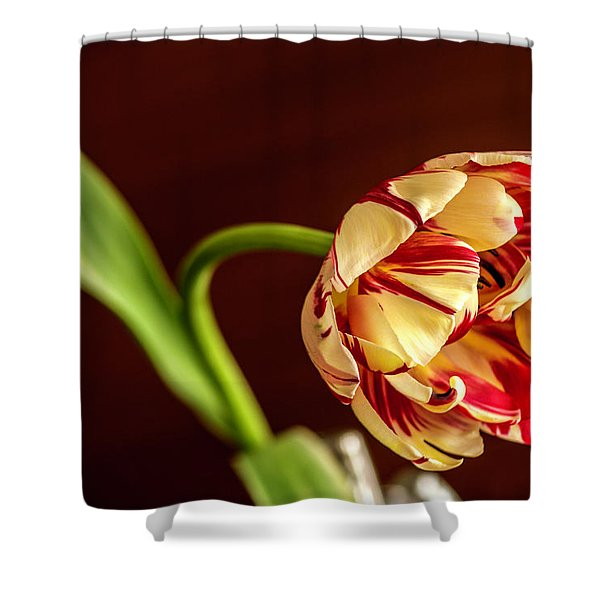 The Tulip's Bow Shower Curtain