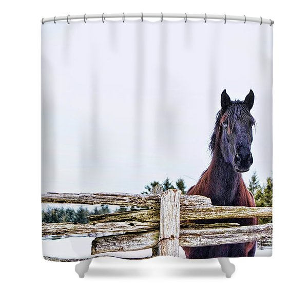 The Watcher 2 Shower Curtain