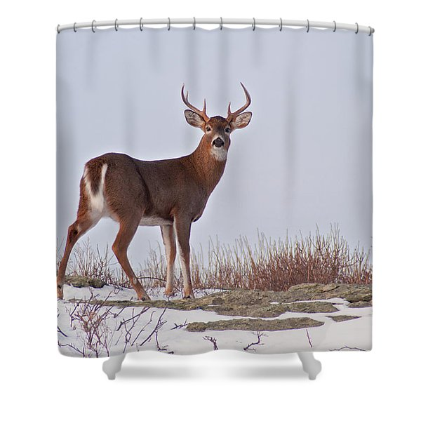 Shower Curtain featuring the photograph The Watchful Deer by Nancy De Flon
