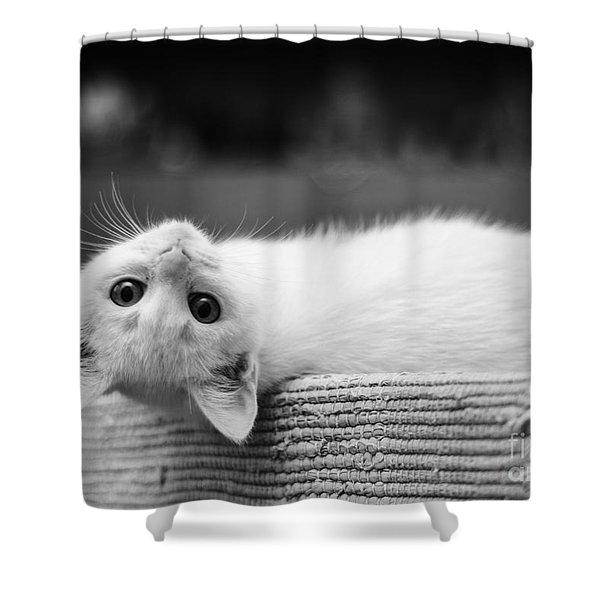 The White Kitten Shower Curtain