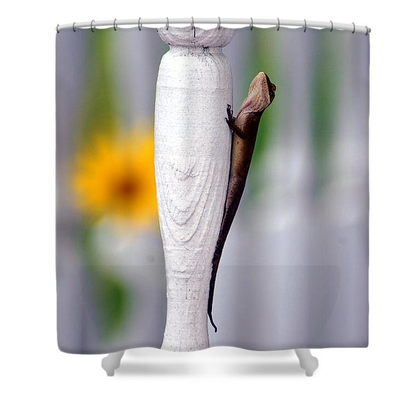 Things Are Looking Up Shower Curtain