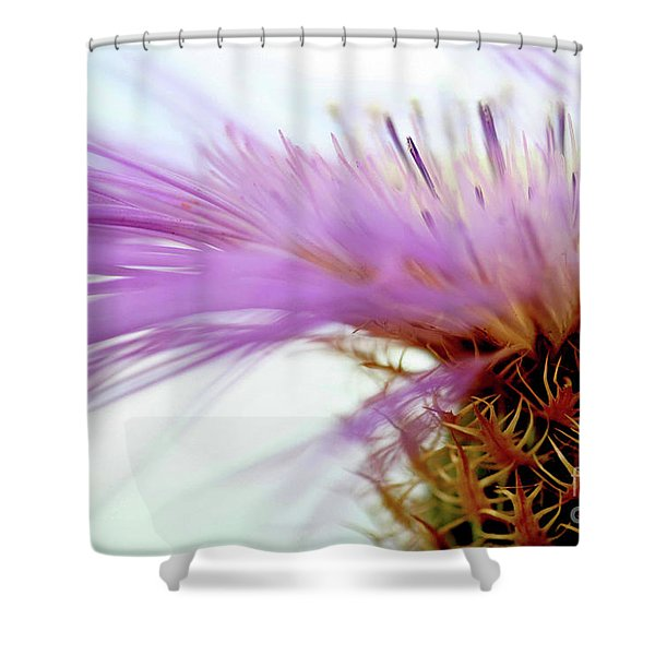 Thistlewhips Shower Curtain