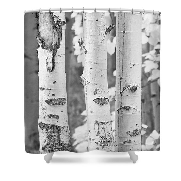 Three Aspens In Black And White  Shower Curtain