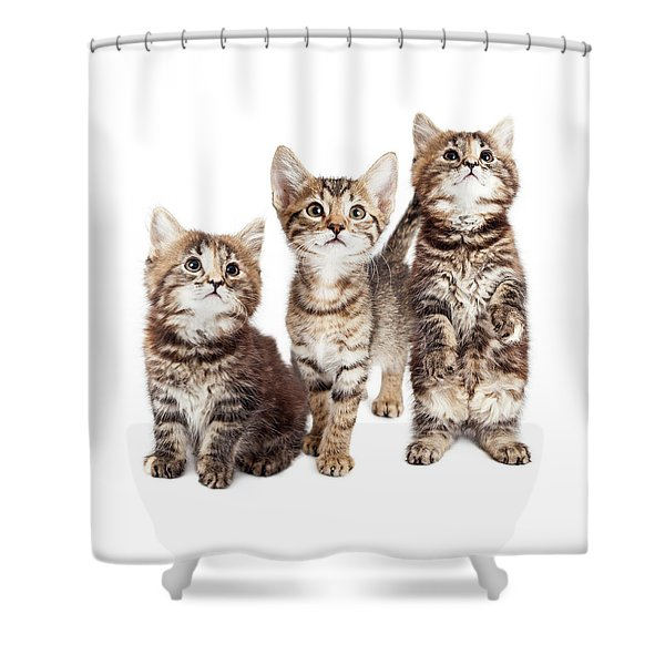 Three Curious Tabby Kittens Together On White Shower Curtain