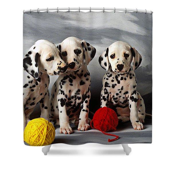 Three Dalmatian Puppies  Shower Curtain