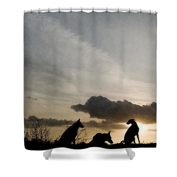 Three Dogs At Sunset Shower Curtain
