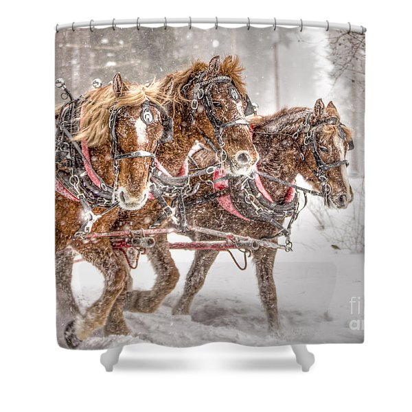 Three Horses - Color Shower Curtain
