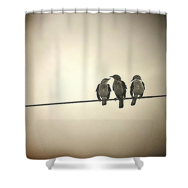 Three Little Birds Shower Curtain