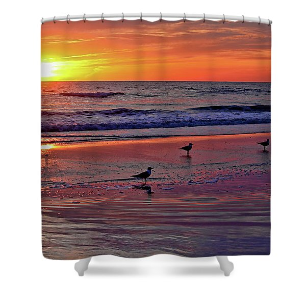 Three Seagulls On A Sunset Beach Shower Curtain