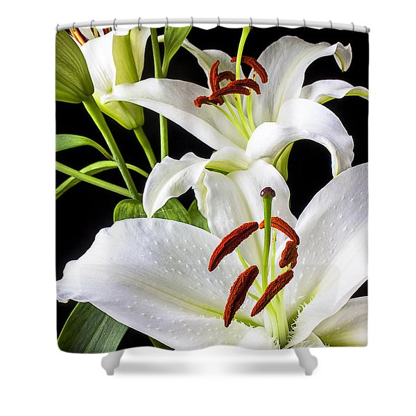 Three White Lilies Shower Curtain