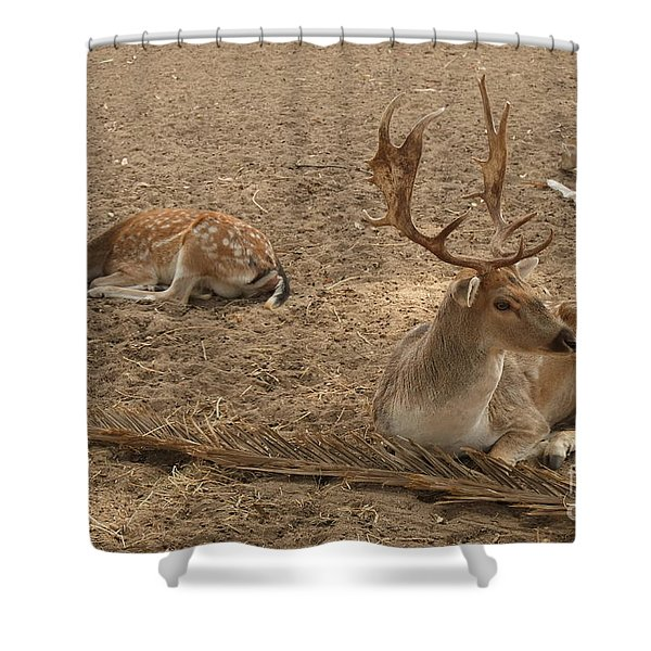 Three Deer Resting Shower Curtain