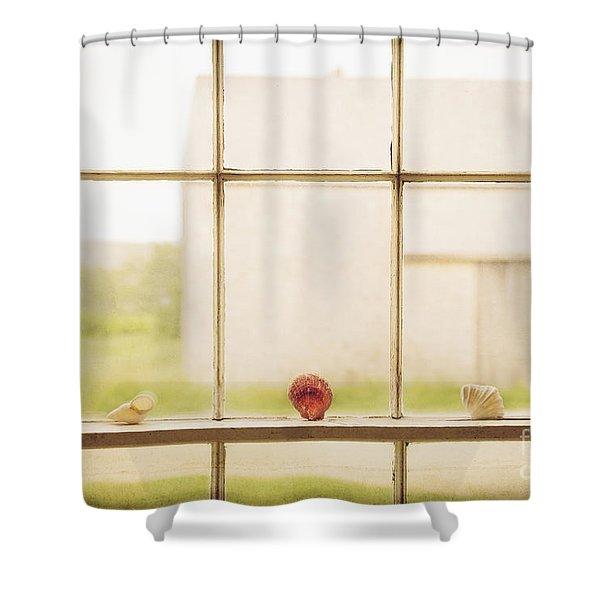 Three Window Shells Shower Curtain