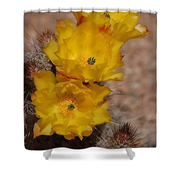 Three Yellow Cactus Flowers Shower Curtain