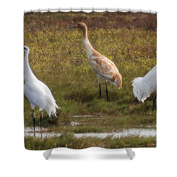 Family Of Cranes Shower Curtain