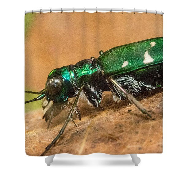 Tiger Beetle Lateral Aspect Shower Curtain