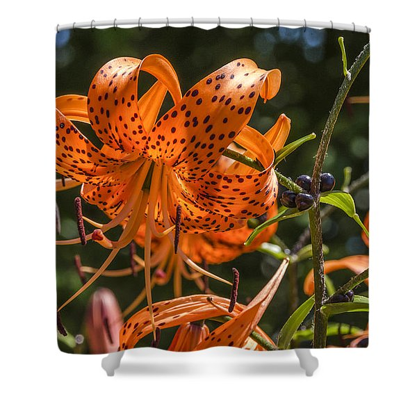 Tiger Lilies In The Sun Shower Curtain