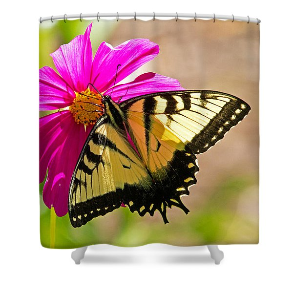 Tiger Swallowtail Butterfly. Shower Curtain