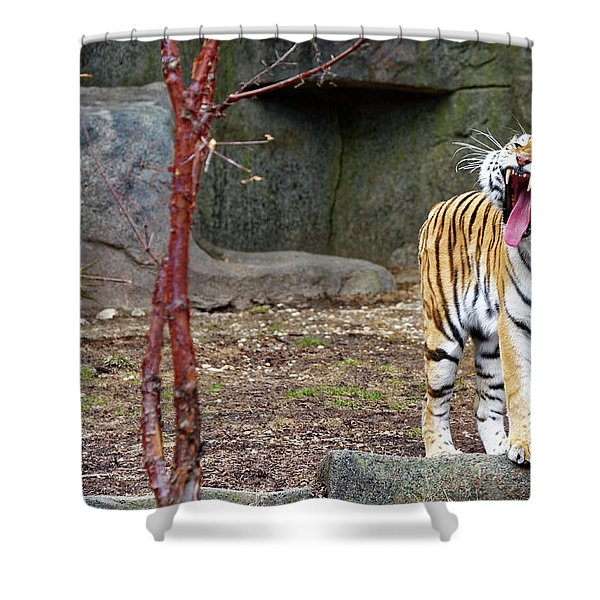 Tiger Tiger Burning Bright Shower Curtain