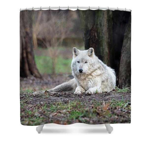 Shower Curtain featuring the photograph Timber Wolf by Andrea Silies