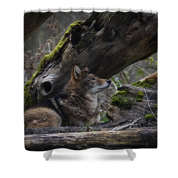 Shower Curtain featuring the photograph Timber Wolf by Randy Hall