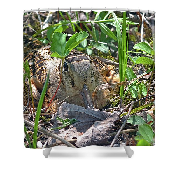 Timberdoodle Hen At Her Nest Shower Curtain