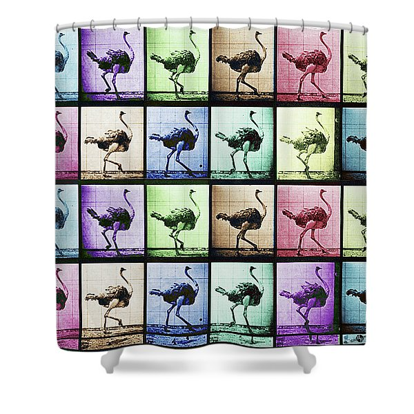 Time Lapse Motion Study Ostrich Color Shower Curtain