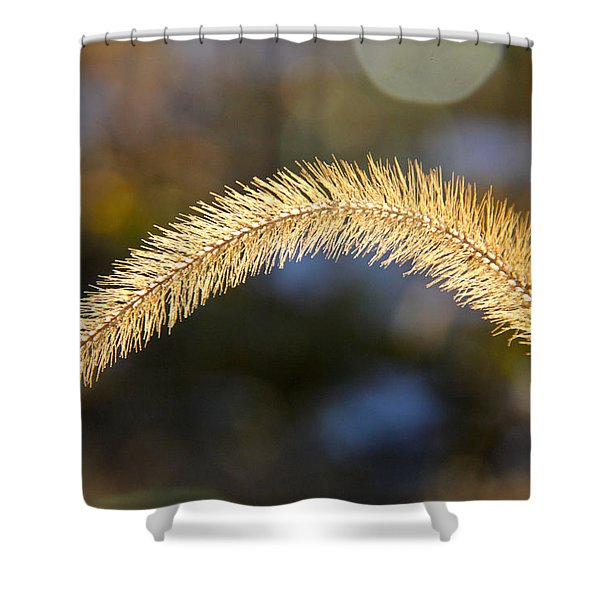 Timothy Shower Curtain