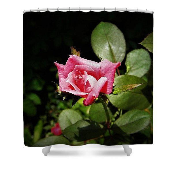 Tiny Rose Shower Curtain