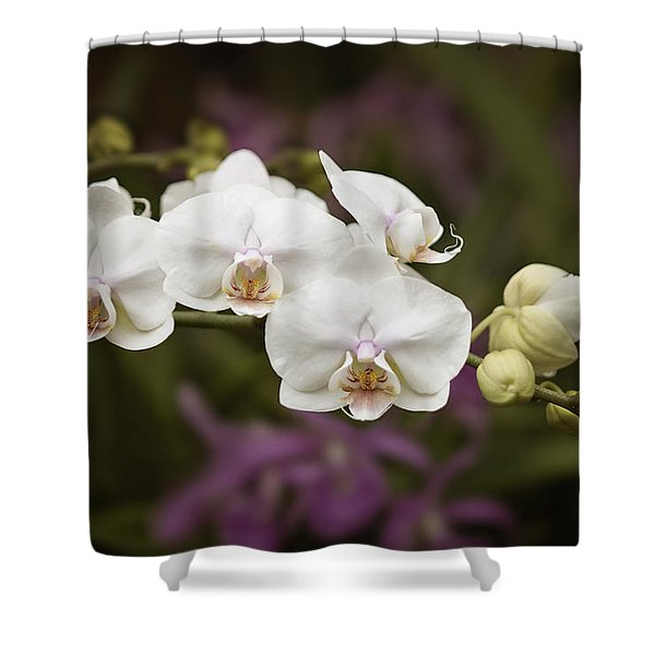Tiny White Dancers Shower Curtain