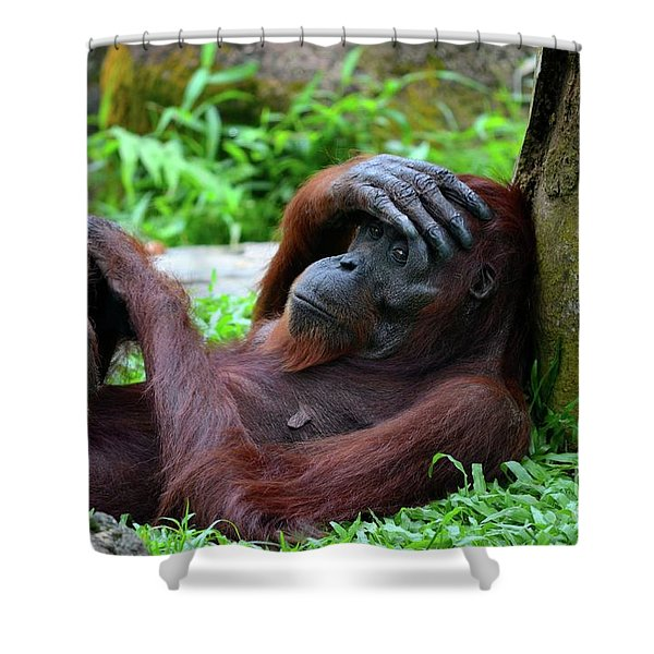 Tired Female Orangutan Ape Rests Against Tree With Hand On Her Head Shower Curtain