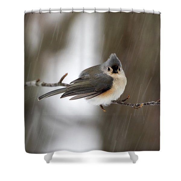 Titmouse During Snow Storm Shower Curtain