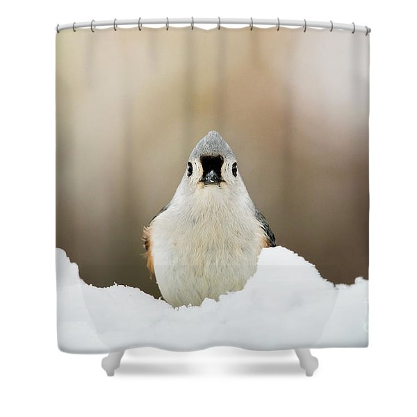 Tufted Titmouse In Snow Shower Curtain