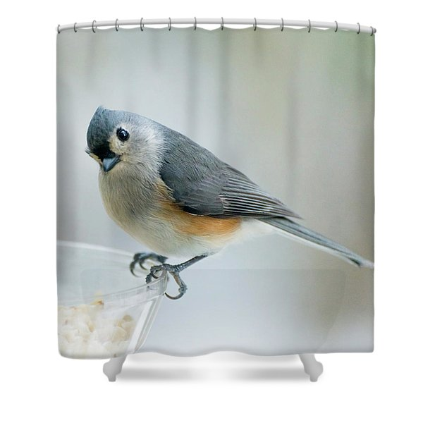 Titmouse With Walnuts Shower Curtain