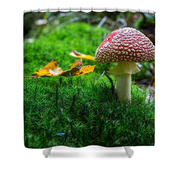 Toadstool Shower Curtain