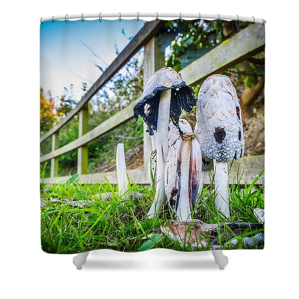 Toadstools. Shower Curtain