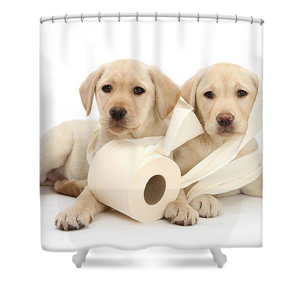 Toilet Humour Shower Curtain