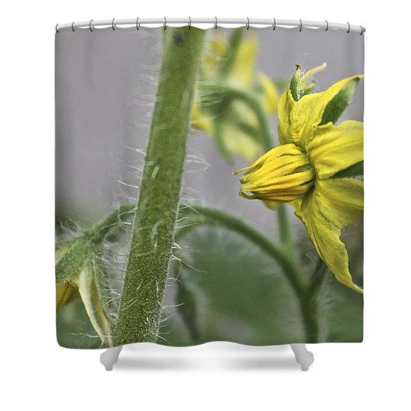 Tomato Babies 3 Shower Curtain