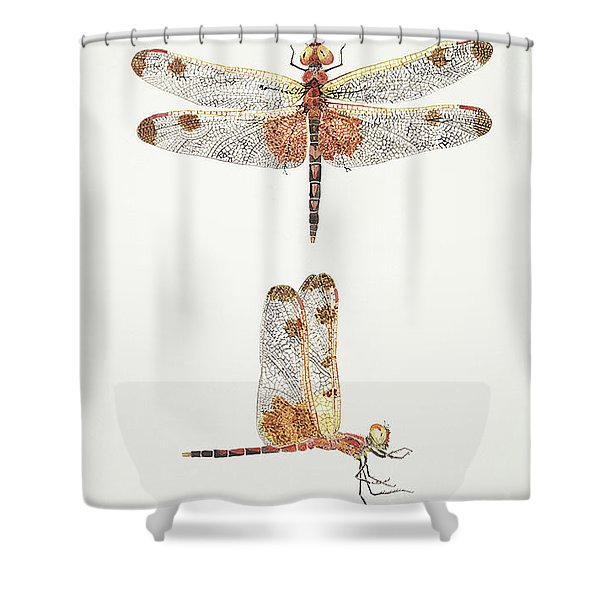 Top And Side Views Of A Male Calico Pennant Dragonfly Shower Curtain
