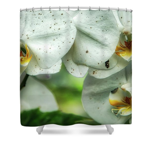 Toronto Orchids Shower Curtain