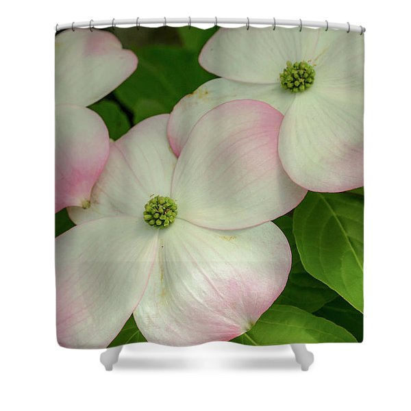 Touch Of Pink2 Shower Curtain