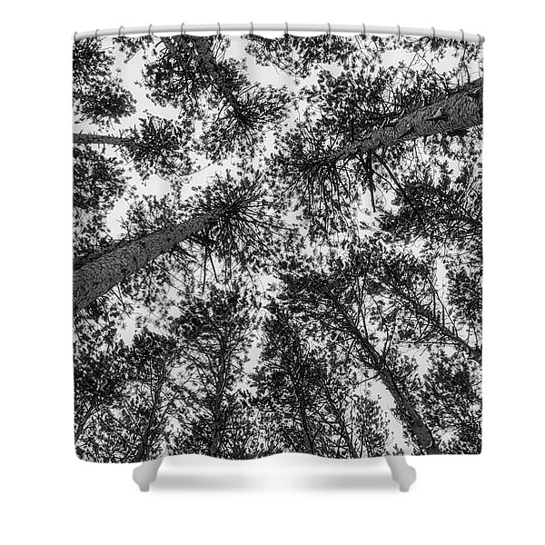 Shower Curtain featuring the photograph Towering Pines by Heather Kenward