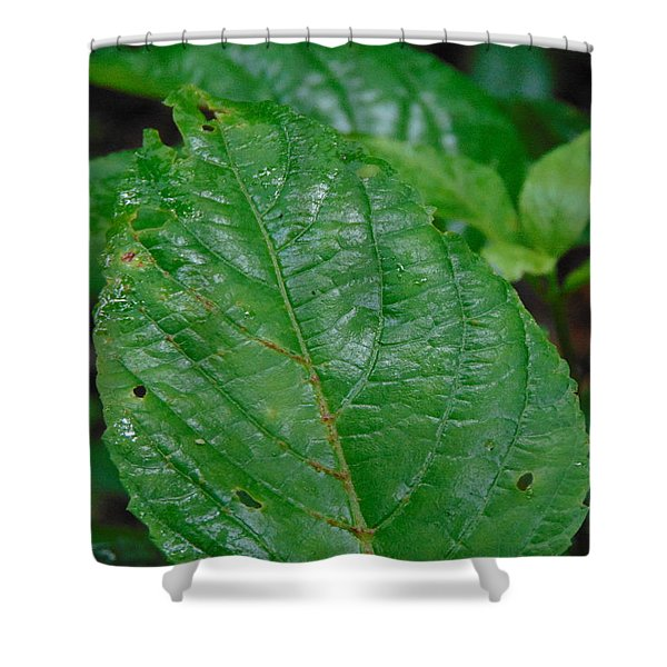 Trail Vibes Shower Curtain