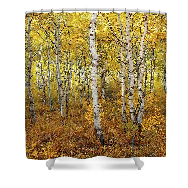 Transition Shower Curtain