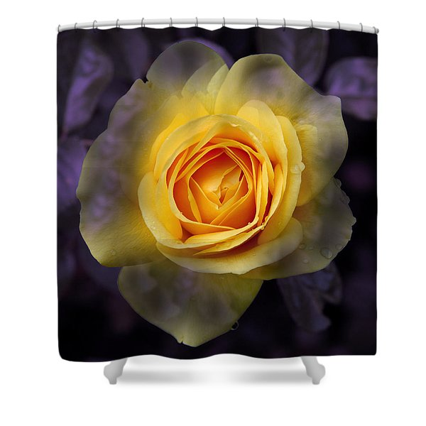 Transitional Rose Shower Curtain