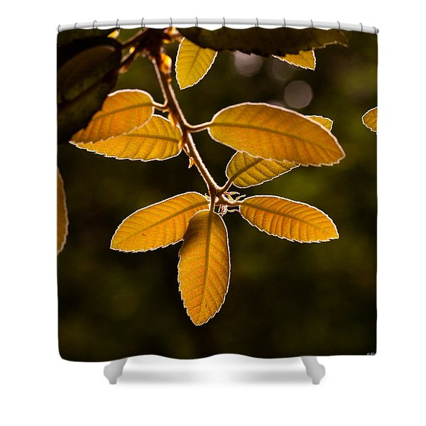 Translucent Leaves Shower Curtain
