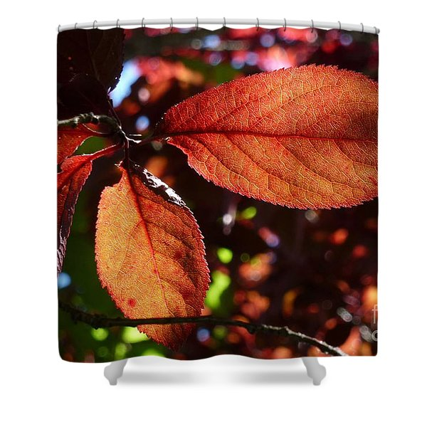 Transparence 17 Shower Curtain